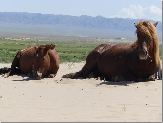 Désert du Gobi - Dunes de Khongoryn Els (157)