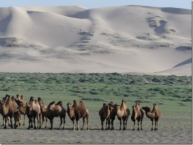 Désert du Gobi - Dunes de Khongoryn Els (19)