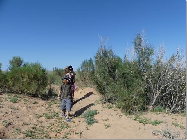 Désert du Gobi - forêt de saxaoul (12)