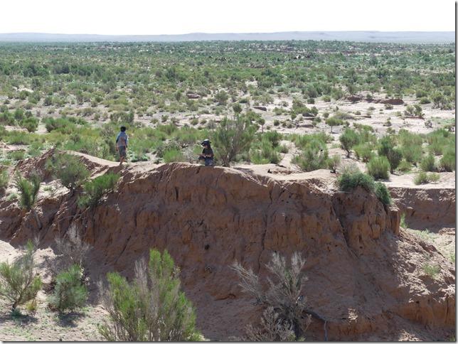 Désert du Gobi - forêt de saxaoul (29)