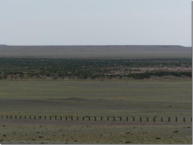 Désert du Gobi - forêt de saxaoul (2)