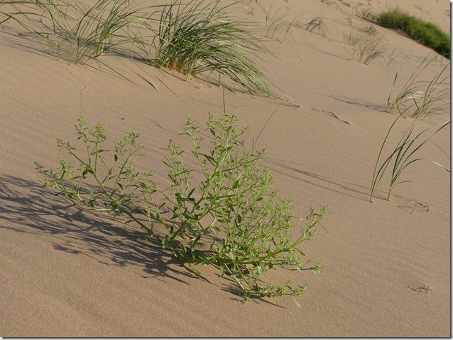 Désert du Gobi - Nuit dans les dunes de Khongoryn Els (84)