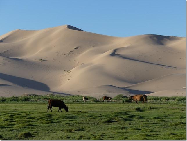 Désert du Gobi - Nuit dans les dunes de Khongoryn Els (89)