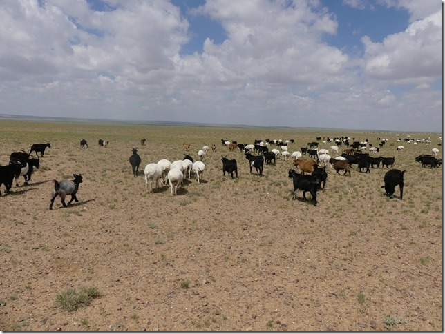 Sur la route du Gobi - chez les éleveurs nomades (157)