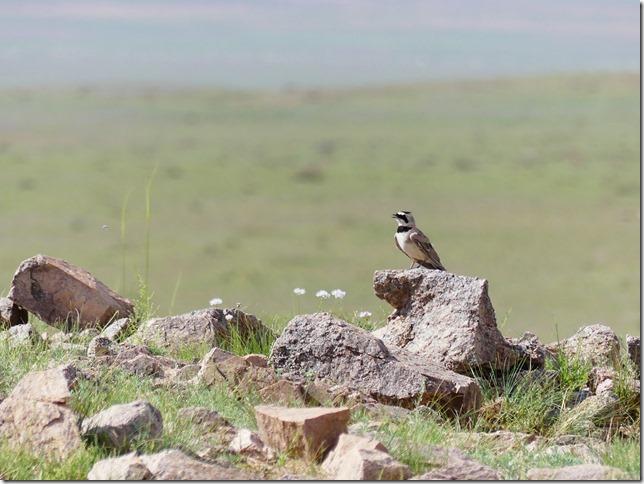 Sur la route du Gobi - chez les éleveurs nomades (224)