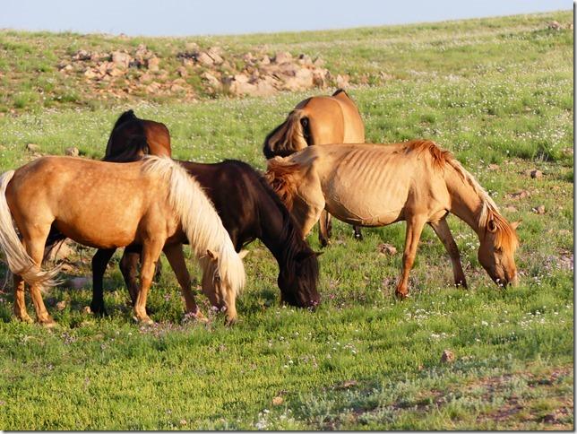 Sur la route du Gobi - chez les éleveurs nomades (346)