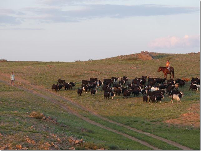 Sur la route du Gobi - chez les éleveurs nomades (375)