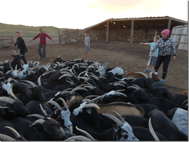 Sur la route du Gobi - chez les éleveurs nomades (386)