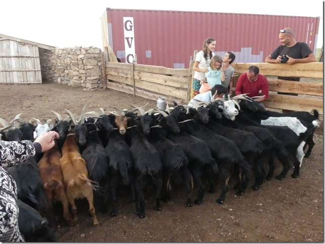 Sur la route du Gobi - chez les éleveurs nomades (414)