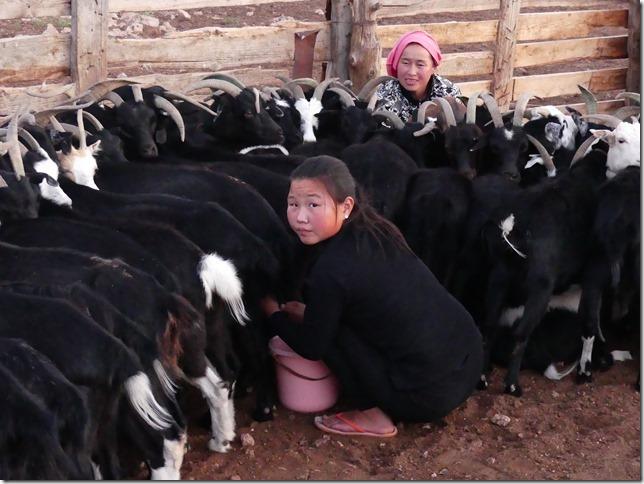 Sur la route du Gobi - chez les éleveurs nomades (417)