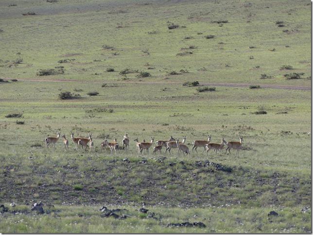 Sur la route du Gobi - chez les éleveurs nomades (47)