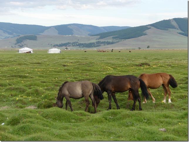 Tosontserleg - Camp de Mongols - T3  (2)