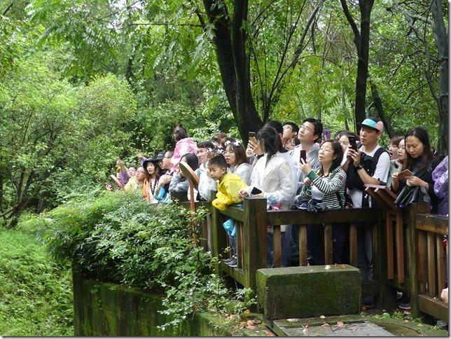 Chengdu - réserve de pandas (100)
