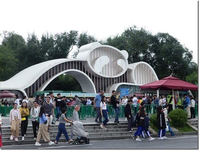 Chengdu - réserve de pandas (130)