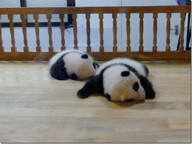 Chengdu - réserve de pandas (51)