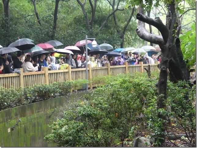Chengdu - réserve de pandas (71)