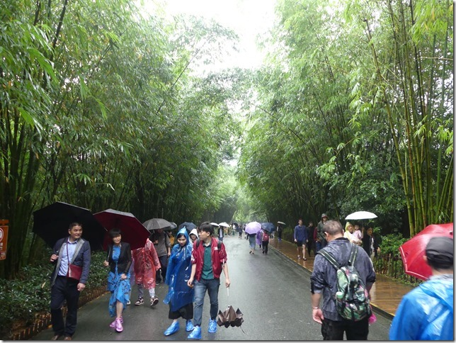 Chengdu - réserve de pandas (73)