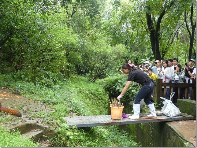 Chengdu - réserve de pandas (92)