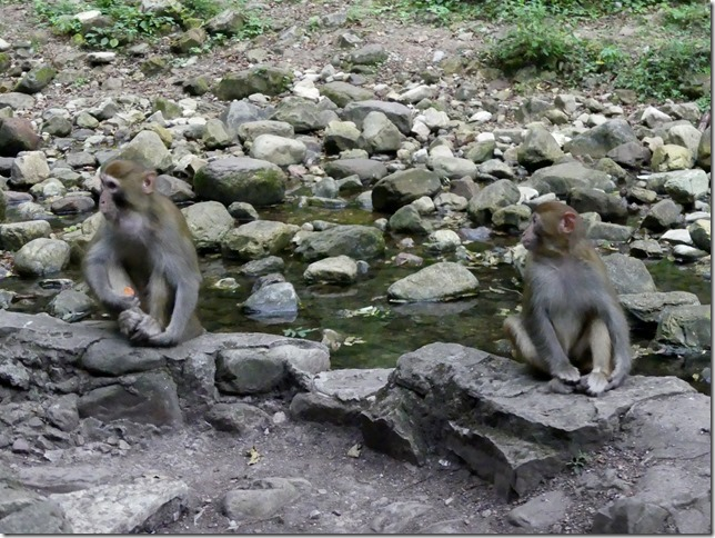 Parc naturel Zhangjiaije (140)