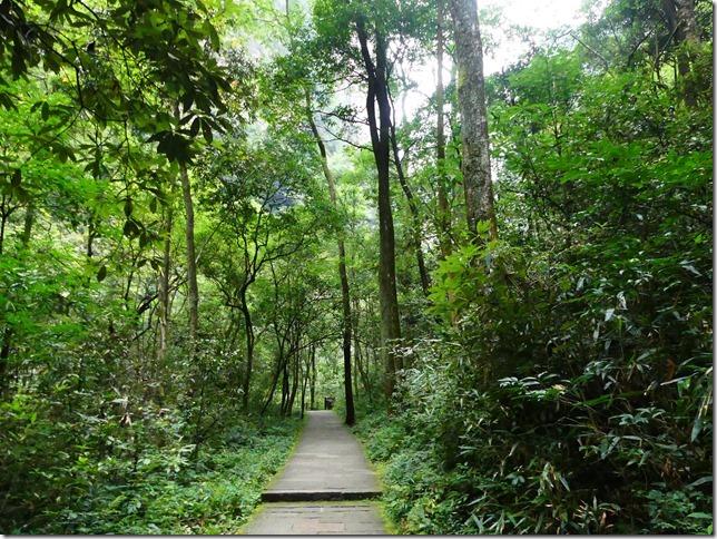 Parc naturel Zhangjiaije (51)