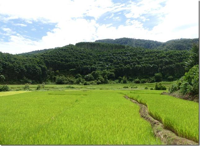 Luang Namtha (190)