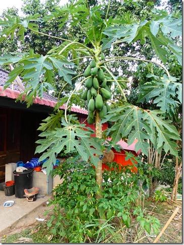 Luang Namtha (30)