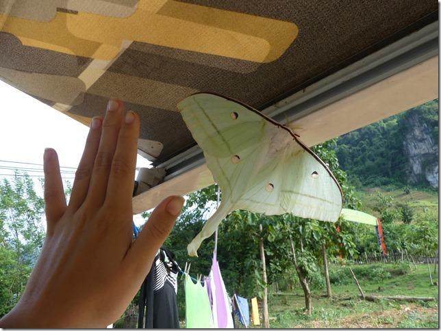 Nong Khiaw Camping (8)