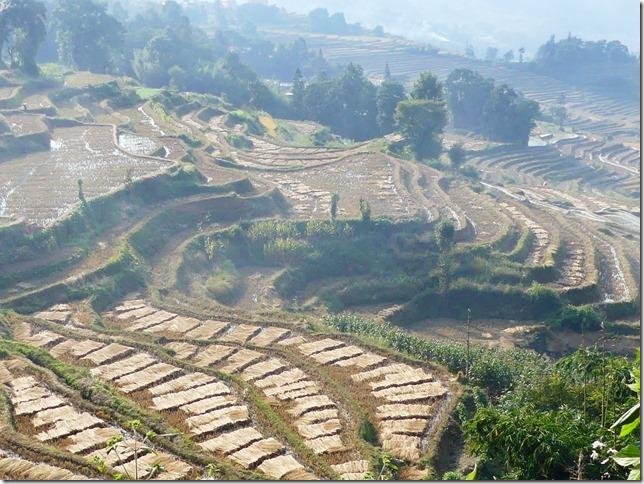 Rizières en terrasse Yuanyang (129)
