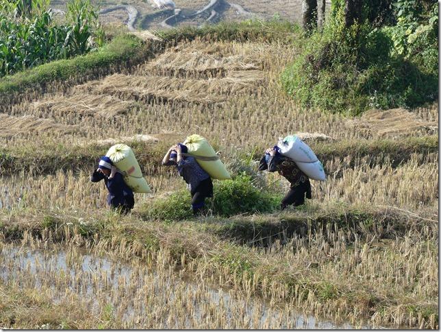 Rizières en terrasse Yuanyang (143)