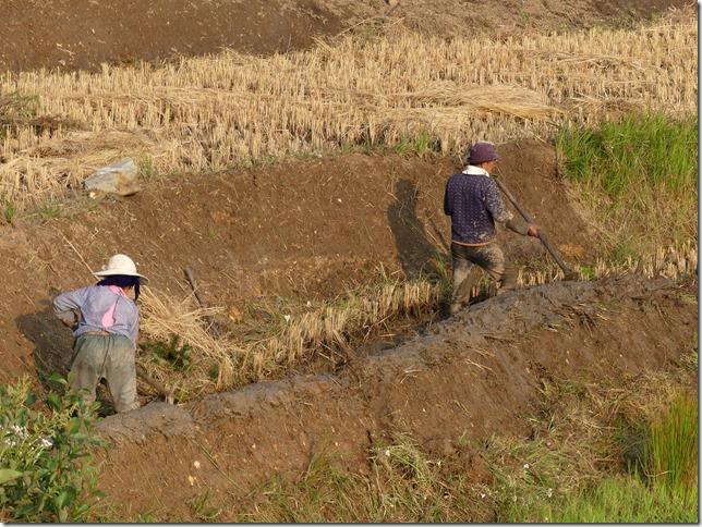 Rizières en terrasse Yuanyang (157)