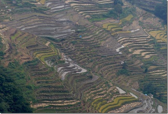 Rizières en terrasse Yuanyang (15)