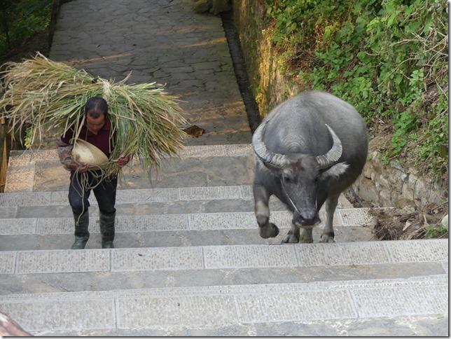 Rizières en terrasse Yuanyang (163)