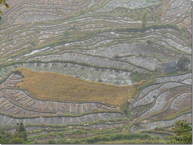 Rizières en terrasse Yuanyang (165)