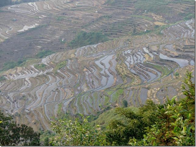 Rizières en terrasse Yuanyang (70)