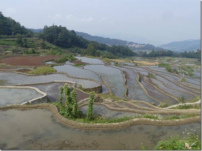 Rizières en terrasse Yuanyang (8)