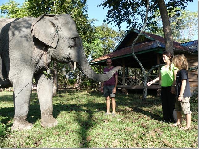 Kiat Ngong Village - éléphant (14)