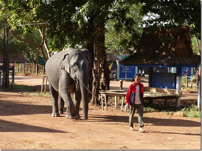 Kiat Ngong Village - éléphant (1)