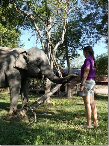 Kiat Ngong Village - éléphant (9)
