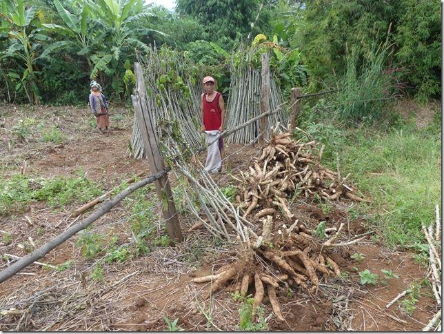 Plateau des Boloven - Kok Phoung Tai, village Katu - Plantation café Captain Hook (53)