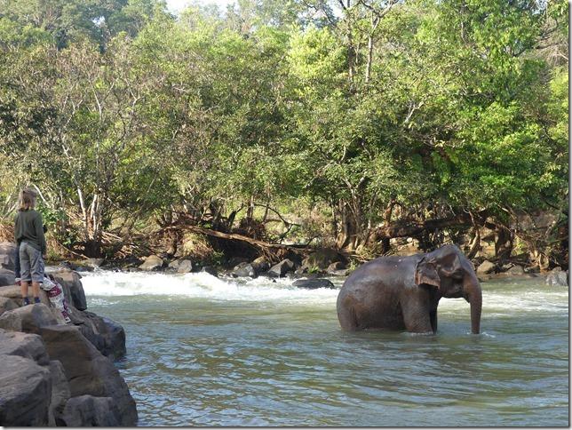 Plateau des Boloven - Tad Lo - éléphants (16)