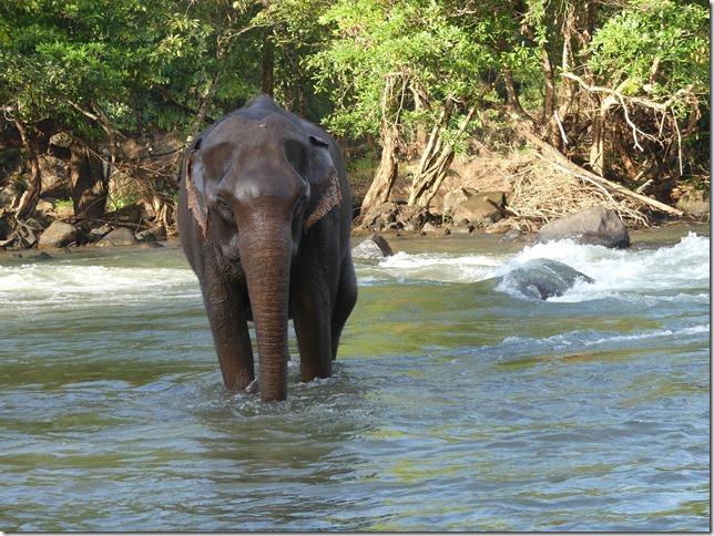Plateau des Boloven - Tad Lo - éléphants (18)