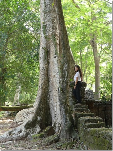 Angkor Tom - Arbres (22)