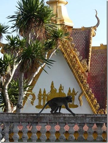 Battambang - Phnom Sampov  (43)