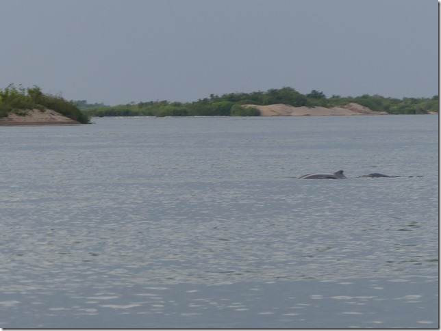 Kampi- sortie bateau dauphins (16)