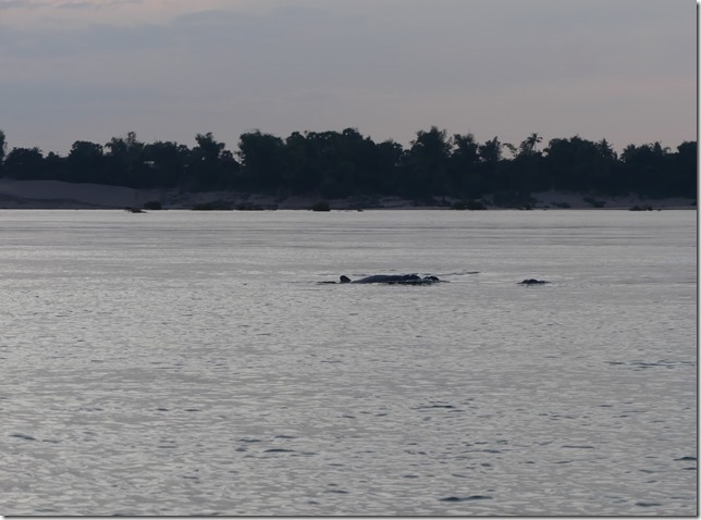 Kampi- sortie bateau dauphins (21)