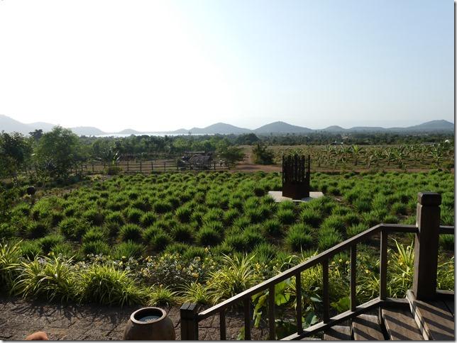 Kampot - La Plantation (48)