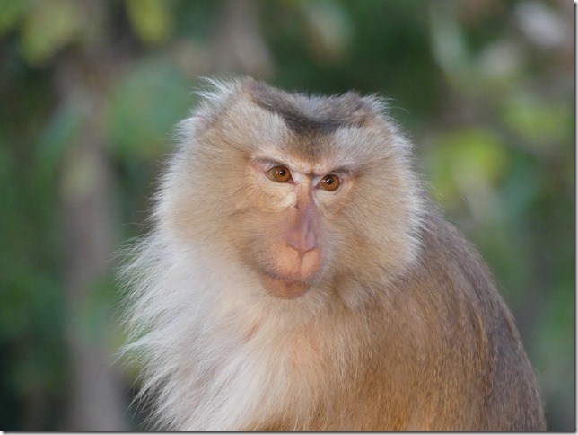Kompong Cham - Temples aux singes (13)
