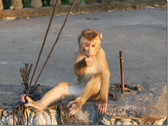 Kompong Cham - Temples aux singes (14)