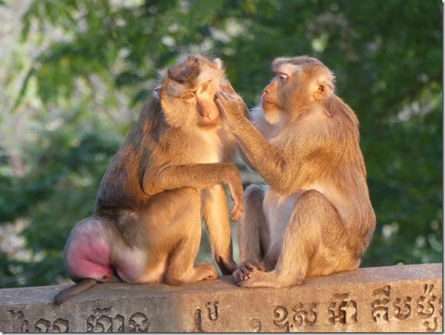 Kompong Cham - Temples aux singes (15)
