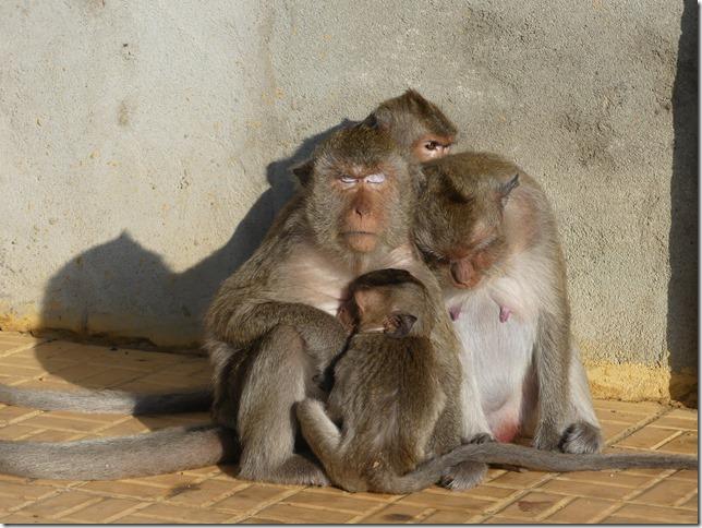 Kompong Cham - Temples aux singes (19)